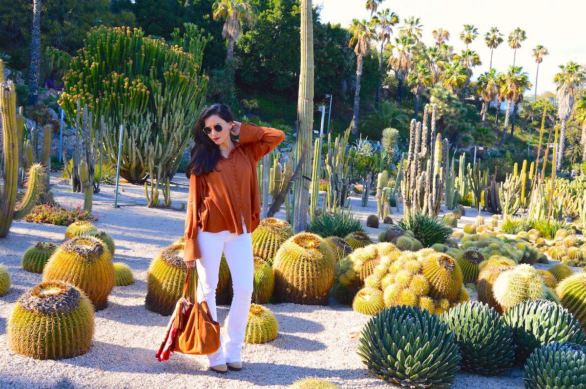 pureBCH-cactuslife